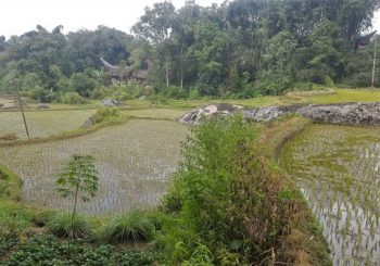 Indonesia -Cycling in Sulawesi  PART 1